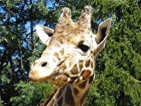 Plumpton Park Zoo: Admission for Two or Four