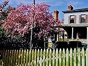Borland House Inn