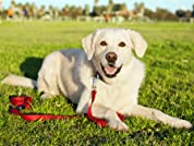 Home Dog Boarding: $70 or $120 to Spend