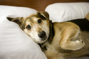 Dog on bed.