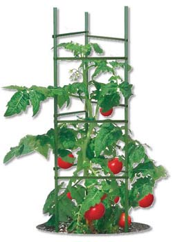 How to Use Tomato Cages | HGTV | Tomato Plant Cages