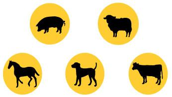 This product works for pigs sheep, horses, dogs and cattle