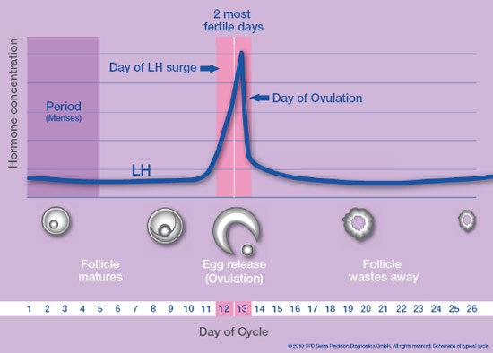 Luteinizing Hormone Chart