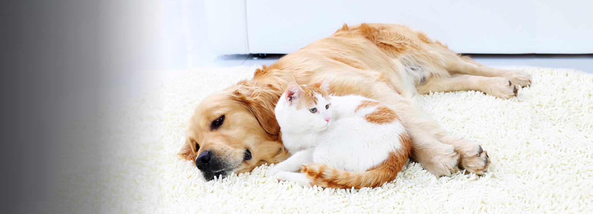 Pets Prime