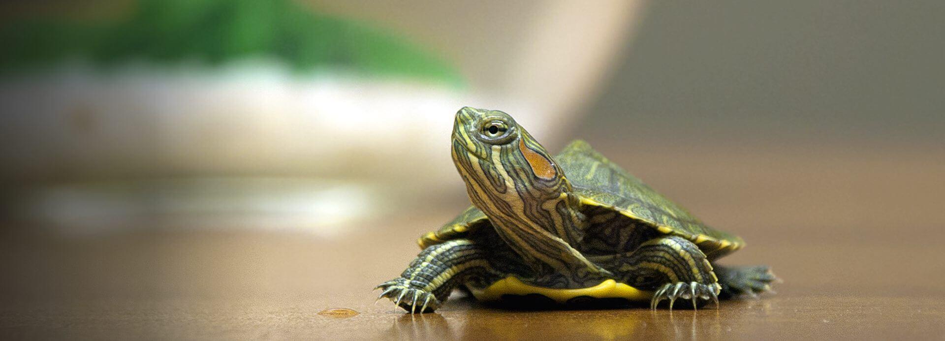 Amazon.com: Reptiles & Amphibians: Pet Supplies: Food, Terrarium Heat