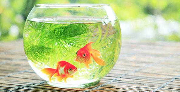 Fish aquatic pets pet supplies aquarium d for Small pet fish