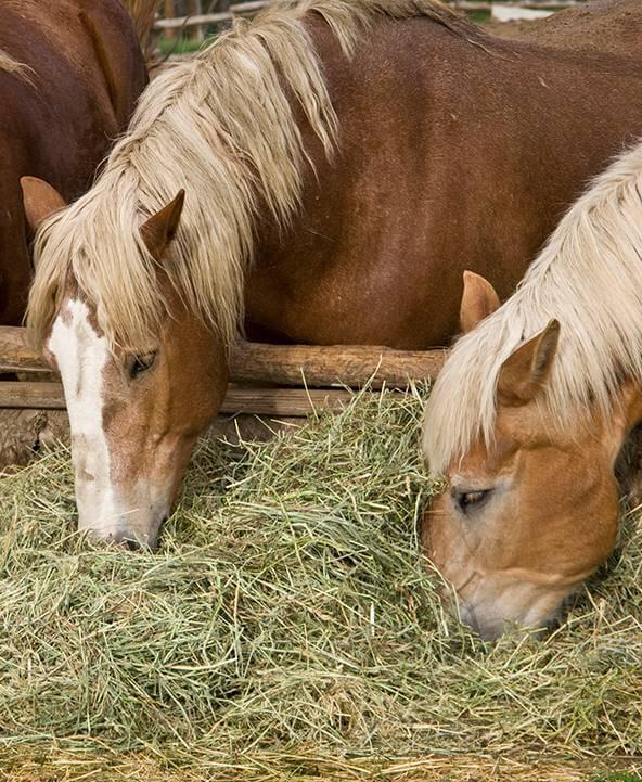 Amazon.com: Horses: Pet Supplies: Blankets & Sheets, Boots & Wraps