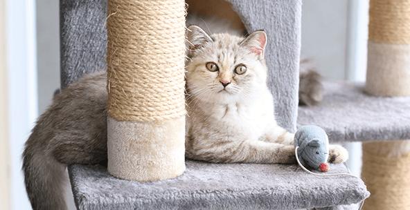 Cat Supplies | Amazon.com