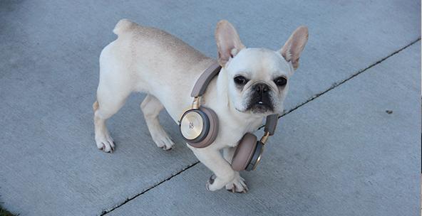 Headphones for everyone