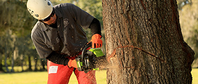 Try the Chainsaw Buying Guide