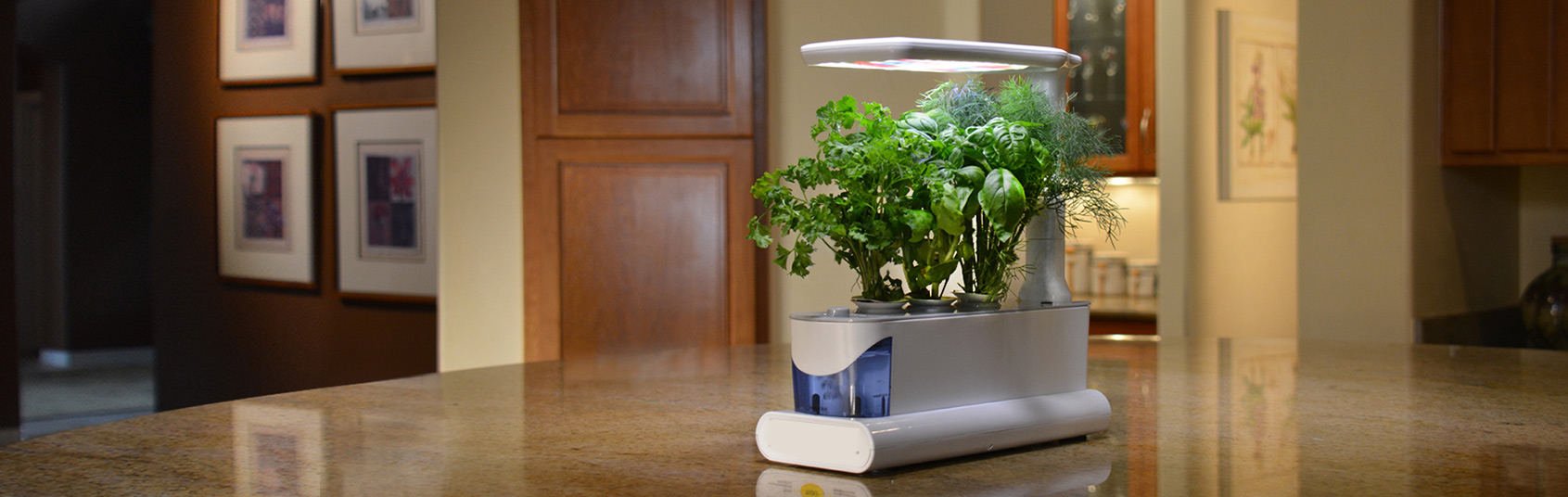 Hydroponic indoor garden modern hydroponic systems for the for Home indoor garden designs