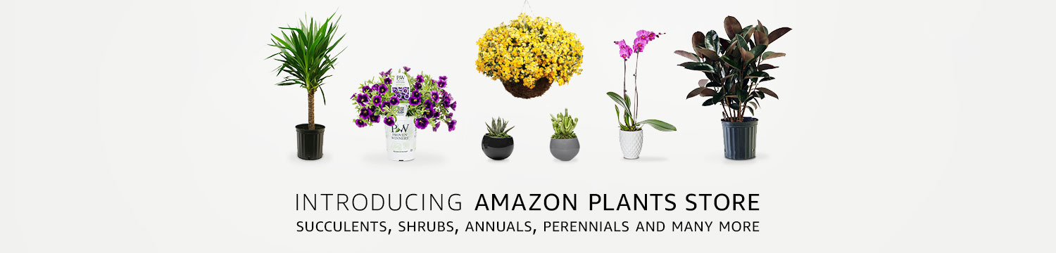 Introducing Amazon Plants Store