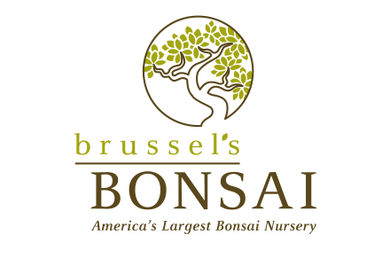 Brussel's Bonsai
