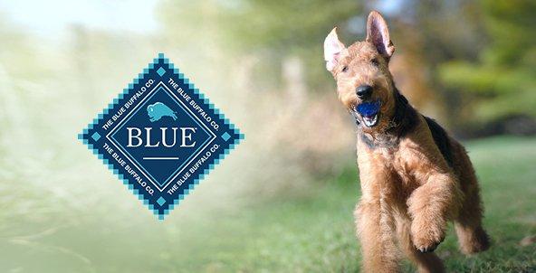 Amazon.com: Perros: Productos para Animales: Apparel ...