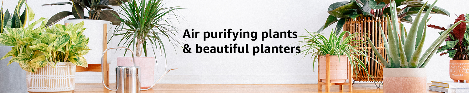 Air purifying plants & beautiful planters
