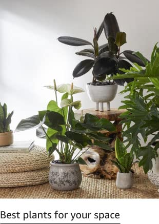 Best plants for your space