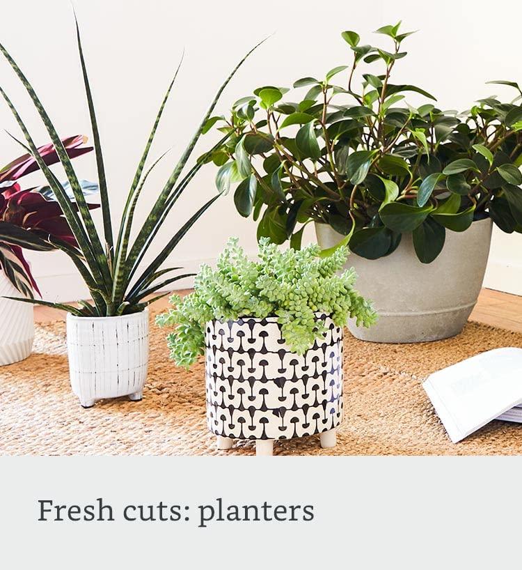 Fresh cuts: planters
