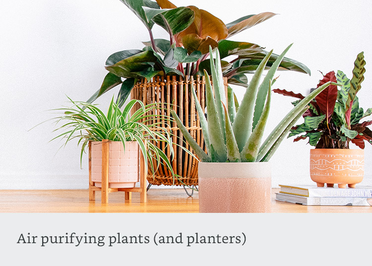 Air purifying plants (and planters)