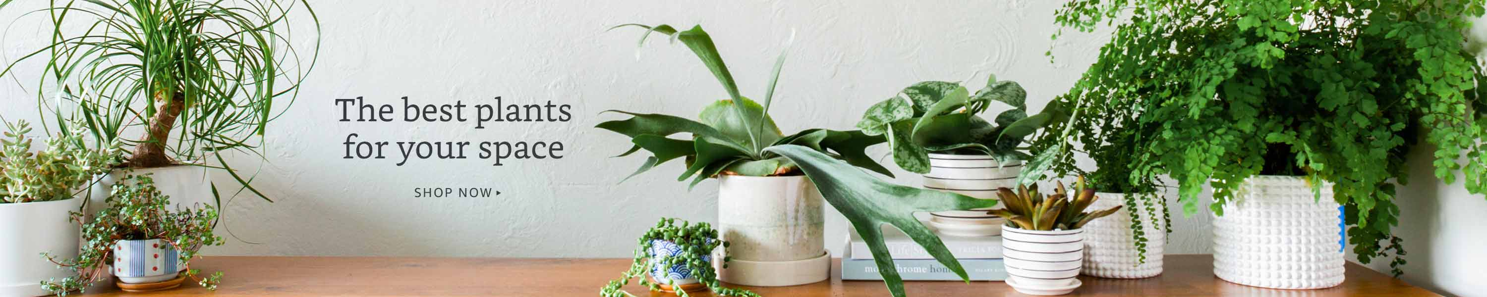 The best plants for your space
