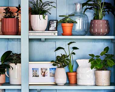 Plants for every space