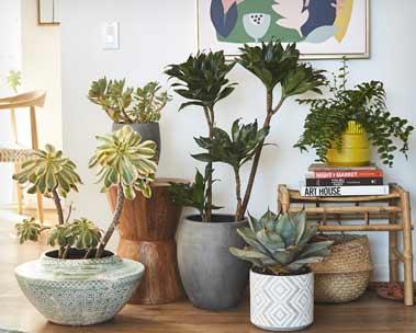 Live plants & planters