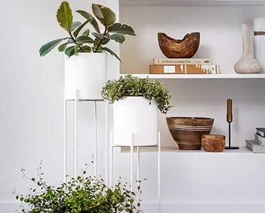 Shop plants & planters