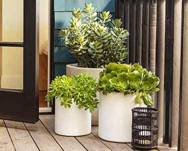 Flex your green thumb. Shop outdoor gardening
