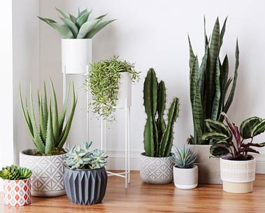 Faux plants - no care required