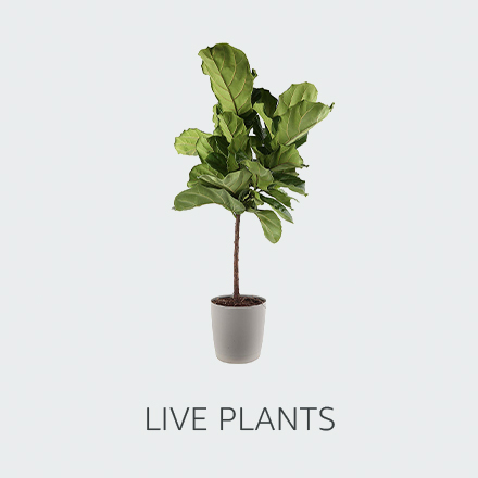 amazon shop by style live plants