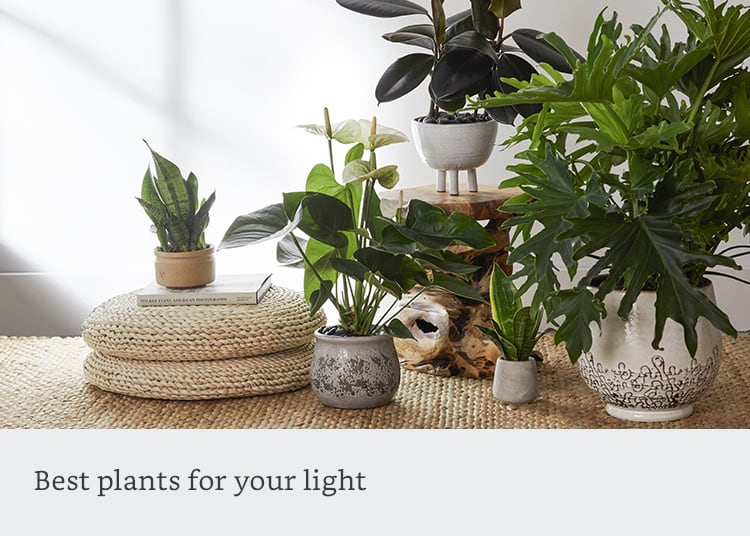 Best plants for your light