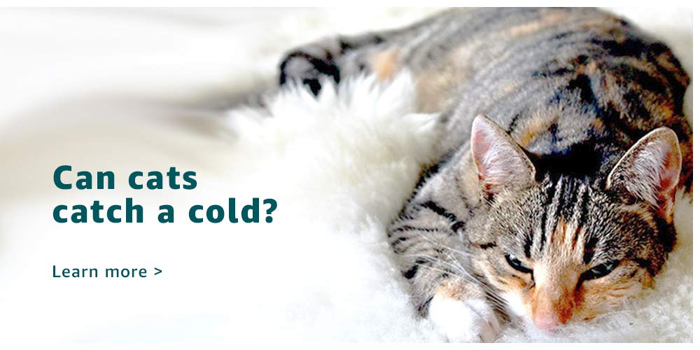 Can cats catch a cold?