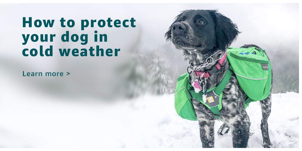 How to protect your dog in cold weather