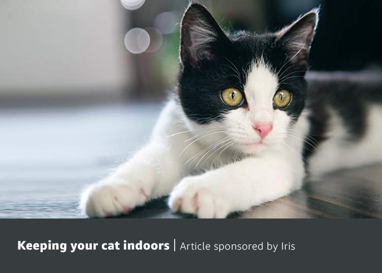 Keeping your cat indoors