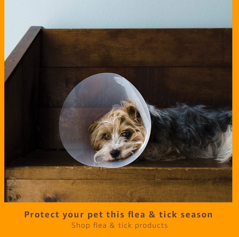 Protect your pet during flea & tick season