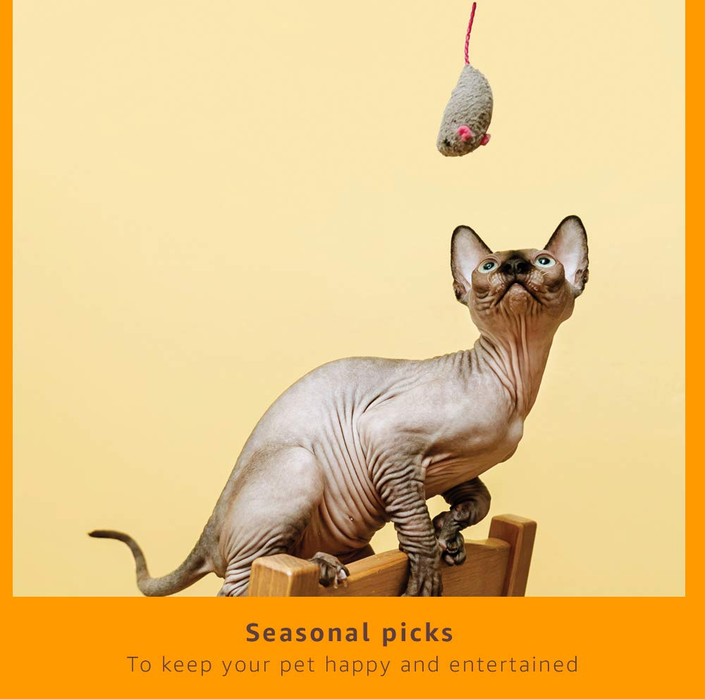 Seasonal Picks