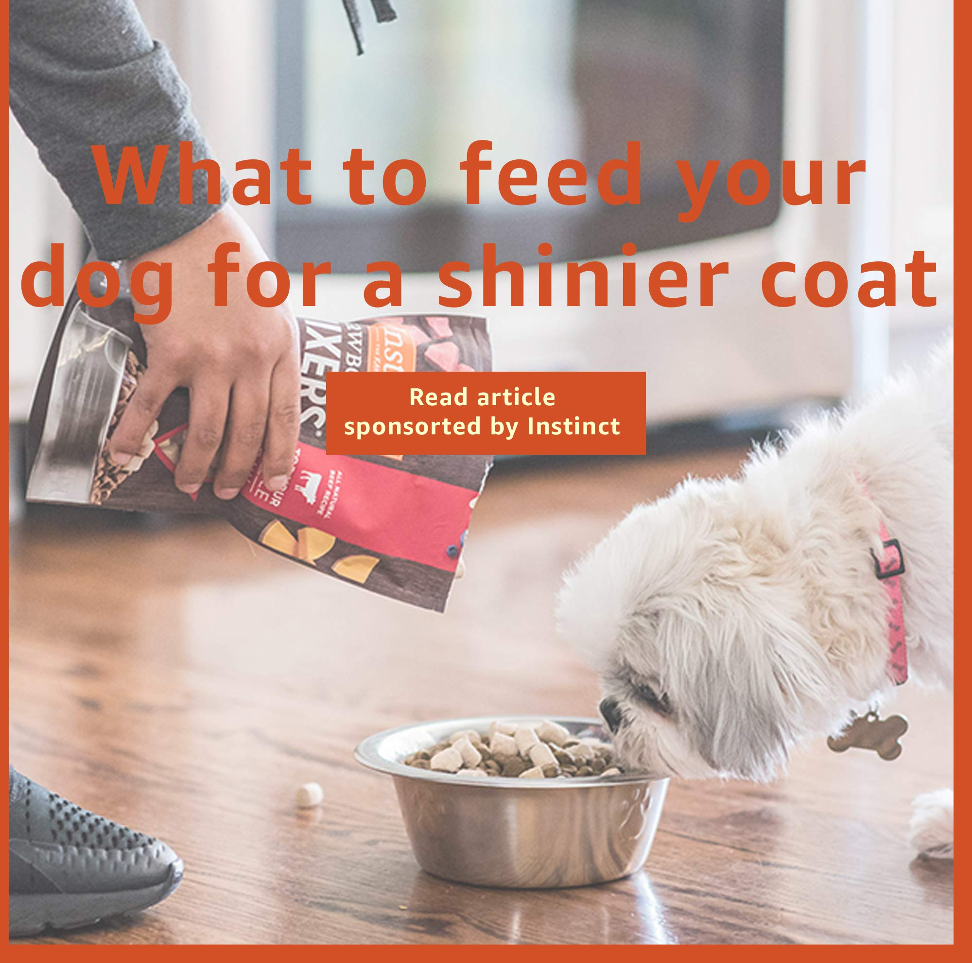 What to feed your dog for a shinier coat