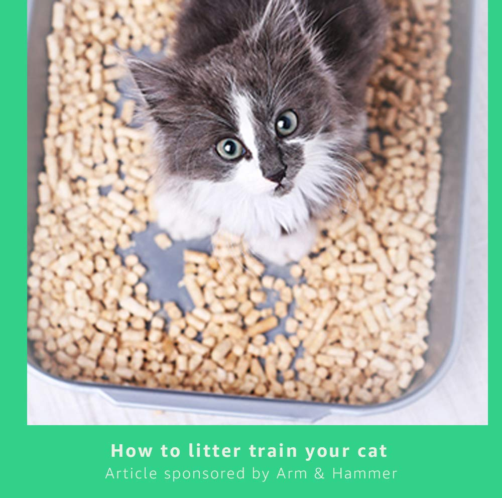 How to litter train your cat