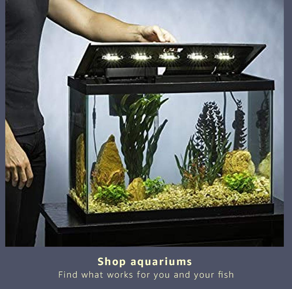 shop aquariums
