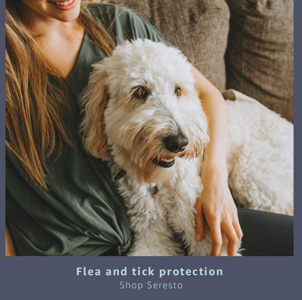 Protection from fleas and ticks