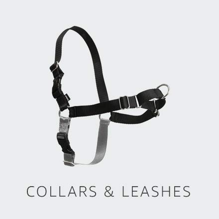 Collars and Leashes