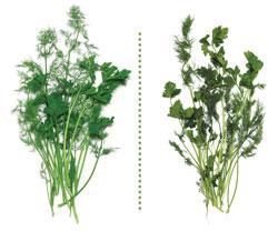 herbs after 2 weeks