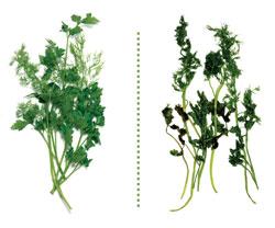 herbs after 3 weeks