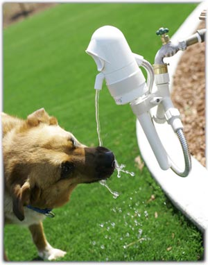 Automatic Dog Drinking Fountain