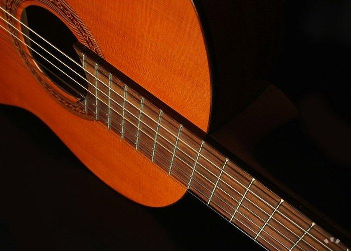 Amazon.com: Cordoba C5 Acoustic Nylon String Classical ...