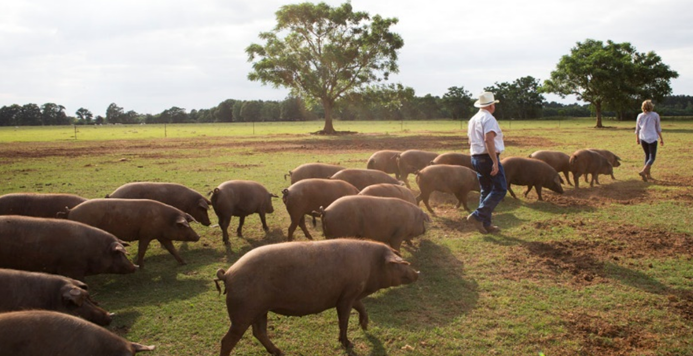 Blufton Farms