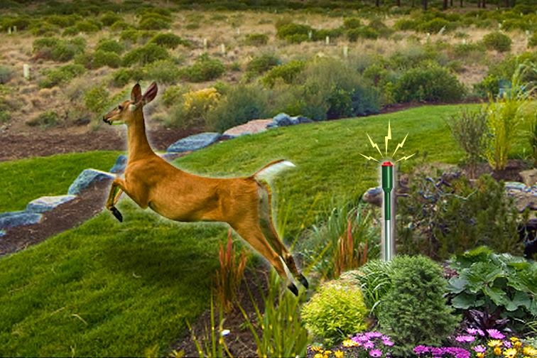 havahart 5250 electronic deer repellent home pest repellents patio lawn garden
