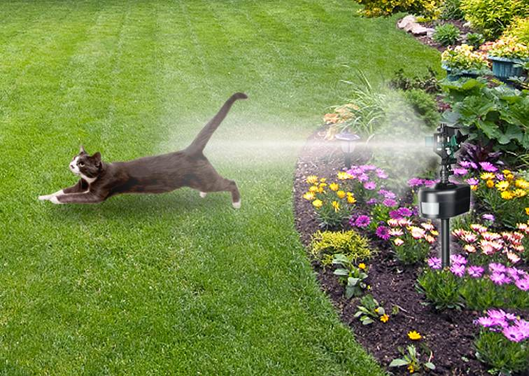 what keeps cats out of your yard