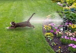 Amazon Com Havahart 5265 Spray Away Motion Detector