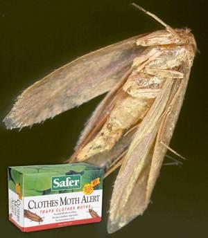 Amazon Com Safer Brand 47050 Gypsy Moth Trap Home Pest Control Traps Patio Lawn Amp Garden