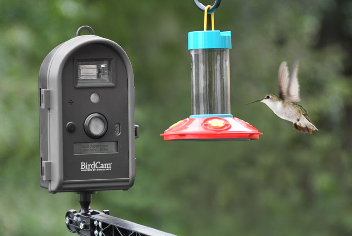 Amazon Com Wingscapes Wsca02 Birdcam 2 0 With Flash